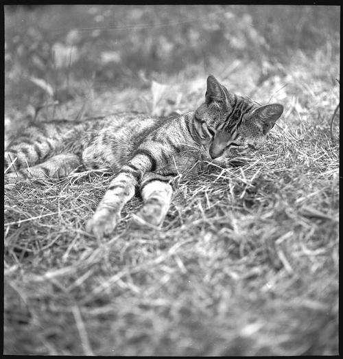 Walker Evans, Cat in the Grass 2