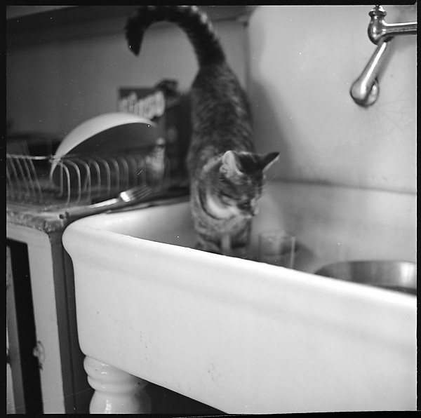 Walker Evans, Cat in the Sink 2