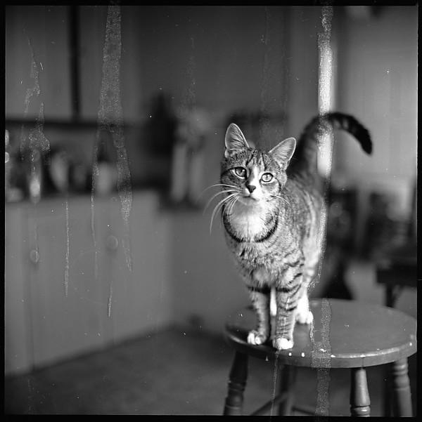 Walker Evans, Cat on a Stool 2