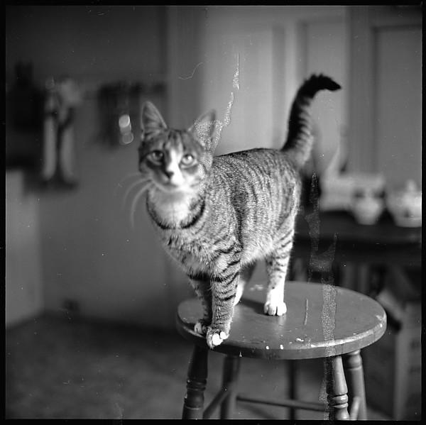 Walker Evans, Cat on a Stool
