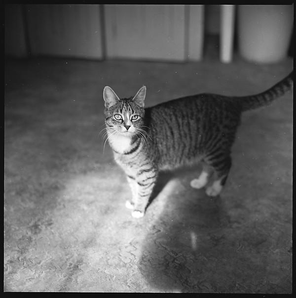 Walker Evans, Expectant Tabby Cat