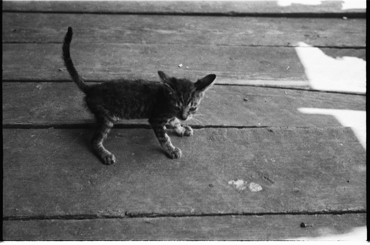 Walker Evans, Kitten