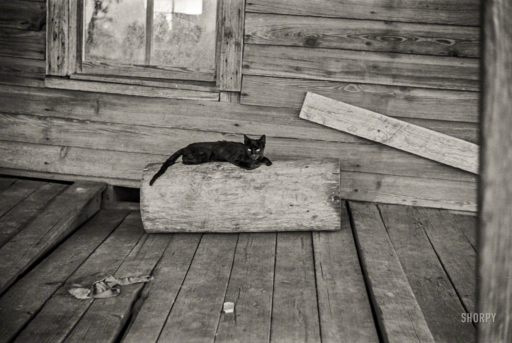 Walker Evans, Summer 1936Cat on porch of a sharecropper's cabin, Hale County, Alabama