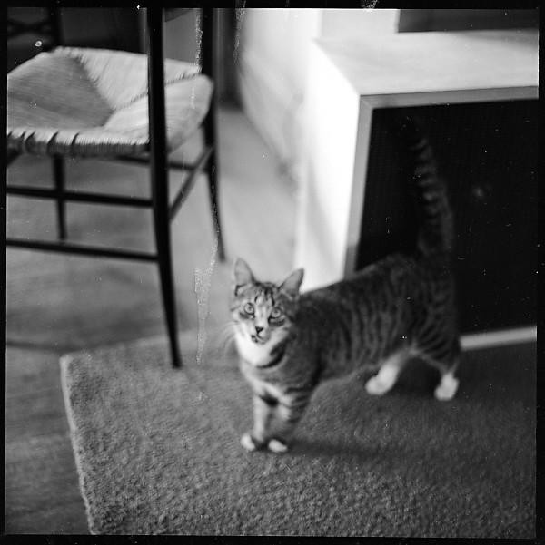 Walker Evans, Tabby Cat