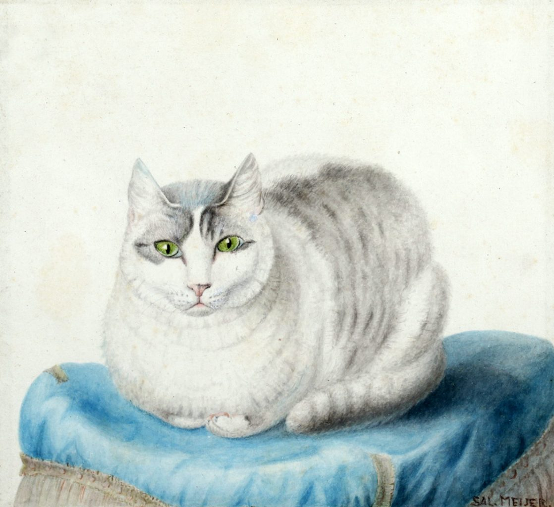 White Cat on Blue Pillow, Sal Meijer