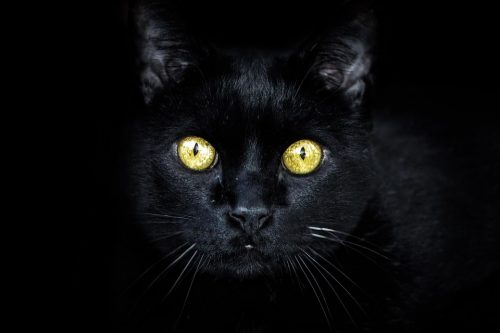 black cats and Friday the 13th