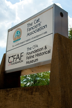 A Complete List of Cat Museums around the World