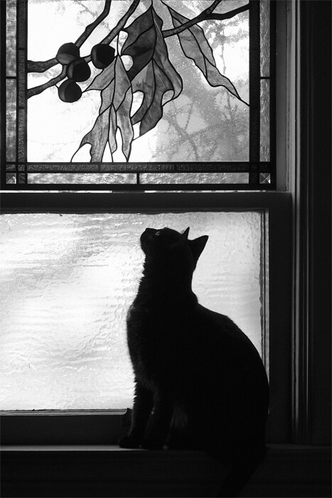 Dianne Woods, Black and White Cat 3