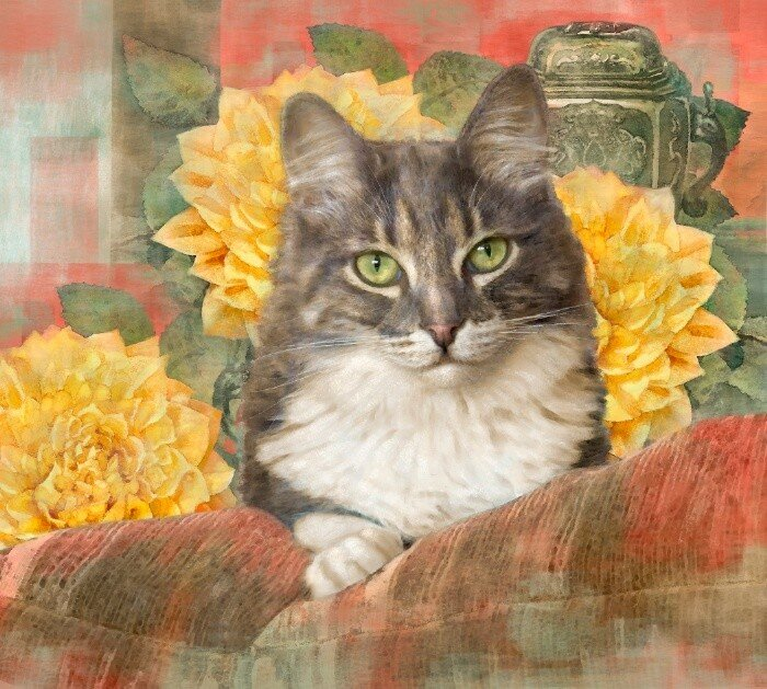 Dianne Woods, Tabby with Yellow Flowers