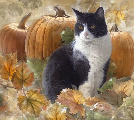 Dianne Woods, Tuxedo Cat with Pumpkins