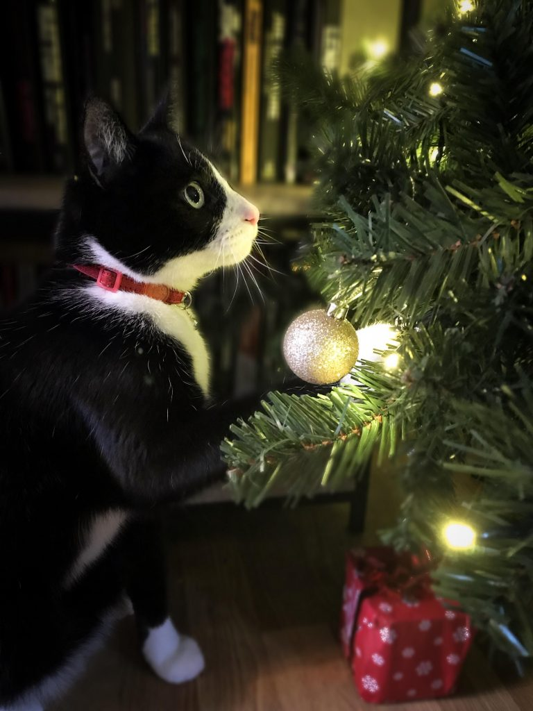 The cat who loved Christmas