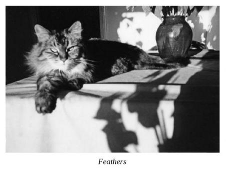 Bukowski's cat Feather