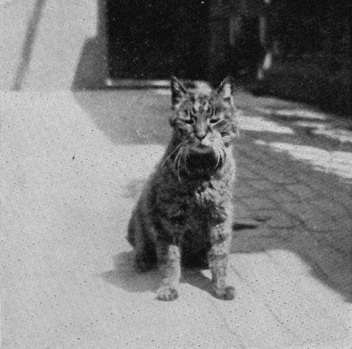 Mike the British Museum Cat