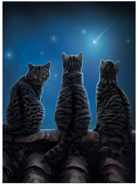 Cat, Wish Upon a Star, Lisa Parker