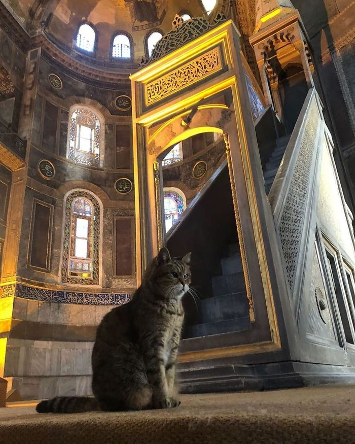 Gli Mosque cat