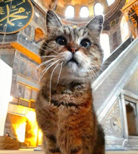 Gli Hagia Sophia Cat