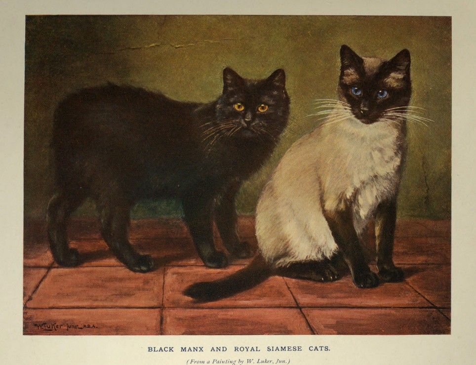 Black Manx and Royal Siamese Cats from a painting by William Luker, Jr.