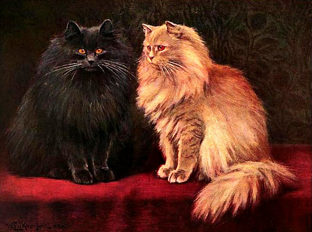 Blue and cream Persian cats public domain William Luker