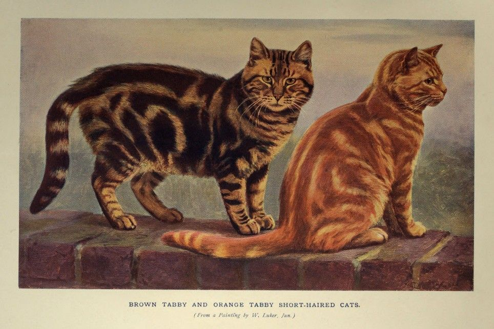 Brown Tabby and Orange Tabby Short-Haired Cats
