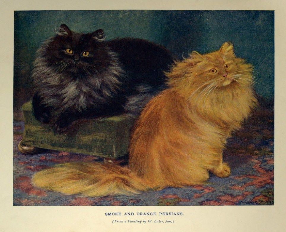 Smoke and Orange Persian Cats