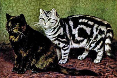 Tortoiseshell and Black tabby cats, William LukerTortoiseshell and Black tabby cats, William Luker