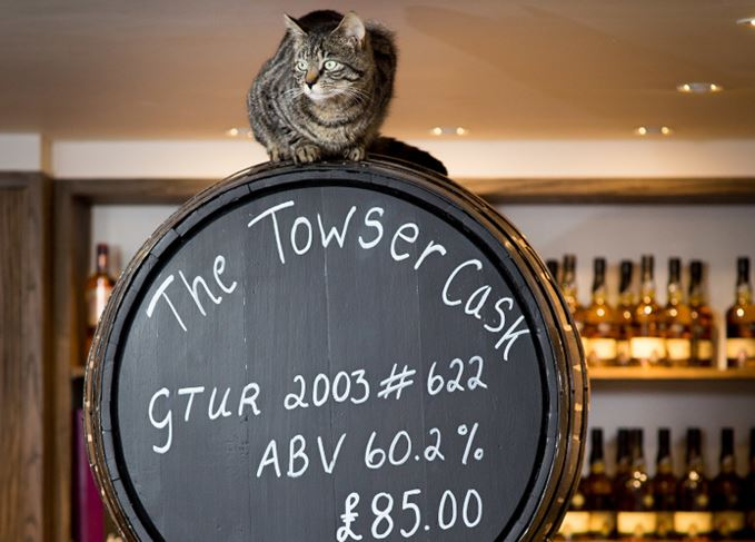 Towser the famous mouser