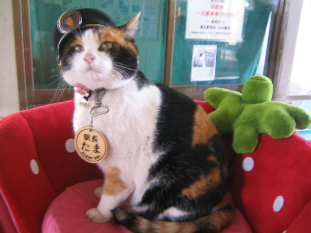 Tama the stationmaster cat